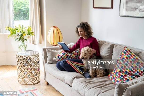 woman relaxing on sofa at home with dog reading digital tablet - sofa stock pictures, royalty-free photos & images