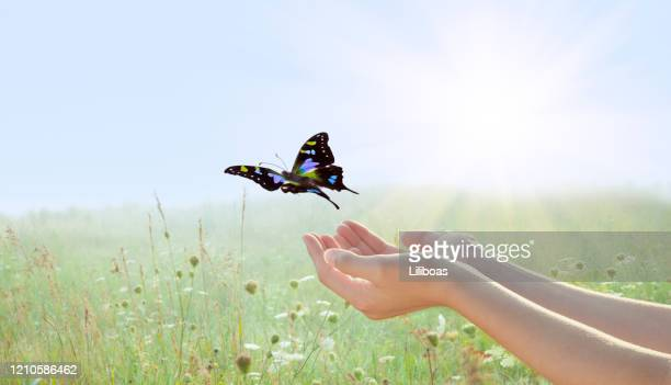 woman releasing a butterfly over field of flowers - releasing stock pictures, royalty-free photos & images