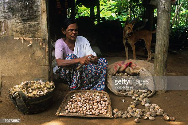 Woman removing husk from areca nut Kerala India