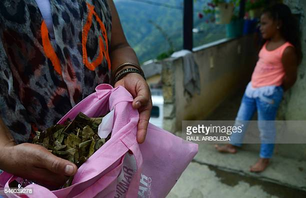 A woman resident of Pueblo Nuevo Briceño municipality Antioquia department Colombia shows coca leaves as the government and the Revolutionary Armed...