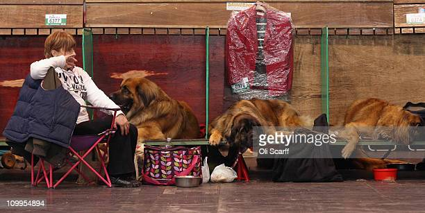 A woman rests with her leonberger dogs on the second day of the annual Crufts dog show at the National Exhibition Centre on March 11 2011 in...