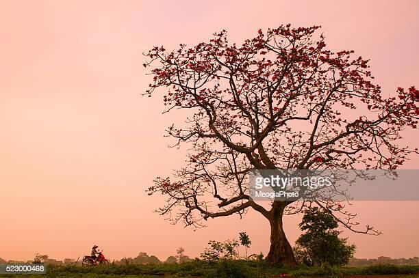 589点のネーション・オブ・イスラムのストックフォト - Getty Images