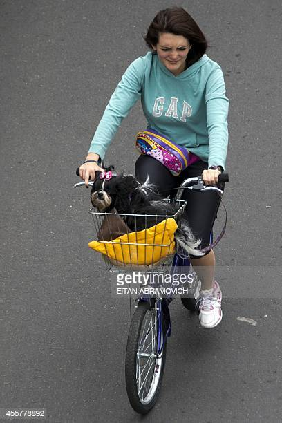 A woman rides her bycicle along the 'Ciclovia' by some Bogota's streets temporarily closed for motor vehicles and enabled for cyclists pedestrians...