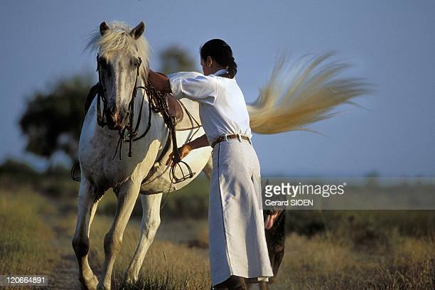 Woman riding a horse in Camargue France Bouches du Rhone regional natural park of Camargue woman preparing to ride on horseback of a camargue horse...