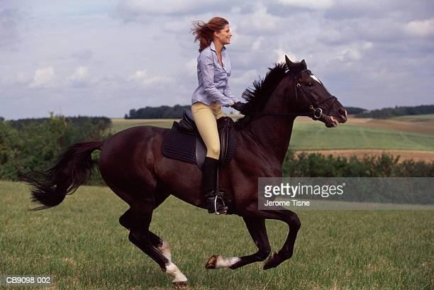 woman riding horse, galloping through countryside - 乗馬 ストックフォトと画像