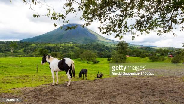 woman riding horse on field against sky - gerold guggenbuehl stock-fotos und bilder