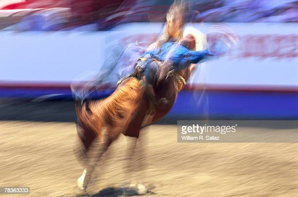 woman riding horse - bull animal stock pictures, royalty-free photos & images