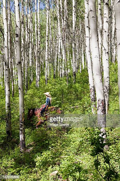 woman riding horse through forest, colorado, usa - beaver creek colorado stock pictures, royalty-free photos & images