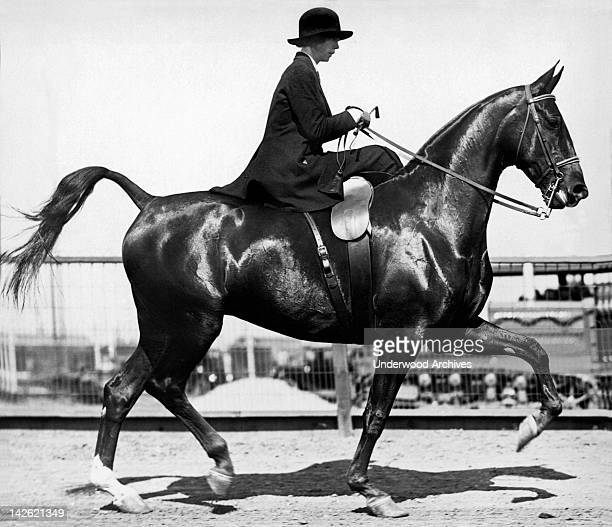 Woman riding sidesaddle performing equestrian excercises, Stockton, California, late 1900s or early 1910s.