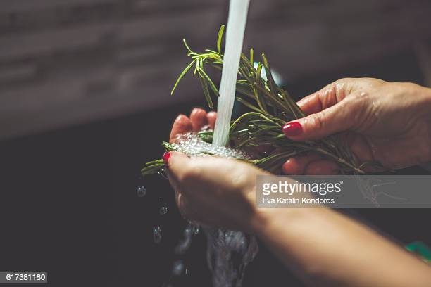 woman rinsing rosemary in the kitchen - herbs stock photos and pictures
