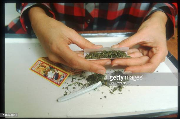 Woman Rolls A Marijuana Cigarette In The USA Marijuana Is A Mixture Of Leaves Stems And Flowering Tops Of The Indian Hemp Plant Cannabis Sativa That...