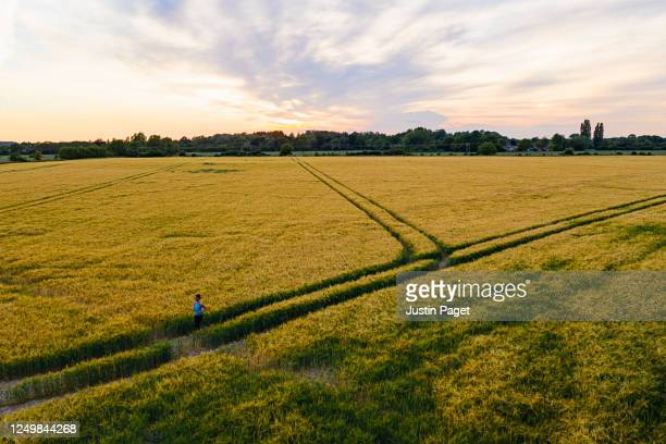 woman running across field at sunset - running stock pictures, royalty-free photos & images