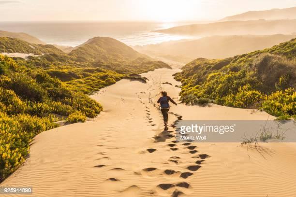 woman running down dunes, sand dunes with yellow lupines (lupinus luteus), sandfly bay, dunedin, otago region, otago peninsula, southland, new zealand - dunedin new zealand stock pictures, royalty-free photos & images
