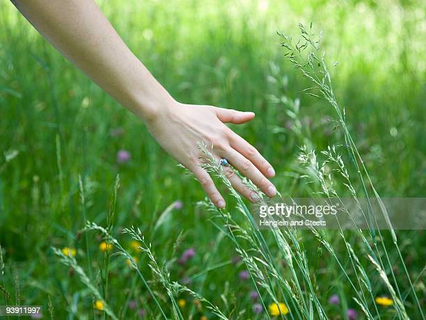 woman running hand through grass - graspflanze stock-fotos und bilder