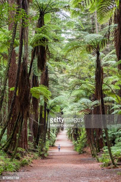 woman running in the redwood forest, rotorua, new zealand - rotorua stock pictures, royalty-free photos & images