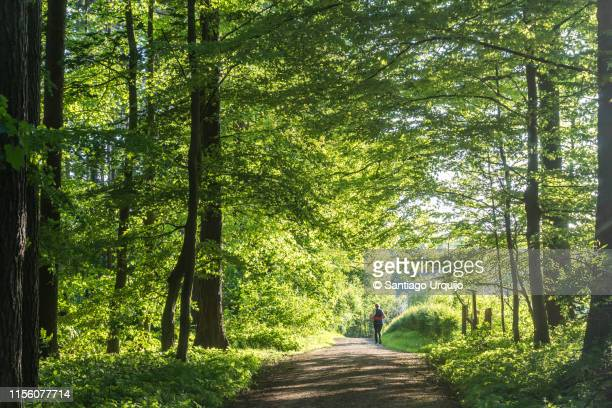 woman running on a beech forest - belgium stock pictures, royalty-free photos & images