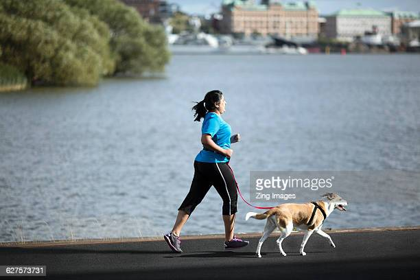 woman running with dog - fat lady in leggings stock photos and pictures