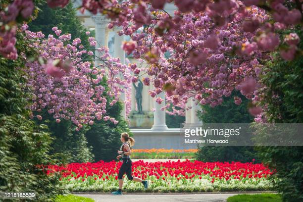 Woman runs in Cathays Park near tulips and blossoming cherry trees on April 11, 2020 in Cardiff, United Kingdom. Police have stepped up patrols to...