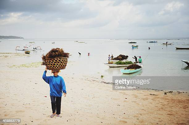 CONTENT] A woman seaweed farmer carries a heavy basket of freshly harvested seaweed on her head on a sandy beach Seaweed farming is the traditional...