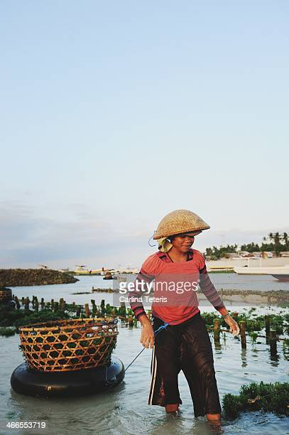 CONTENT] A woman seaweed farmer drags a halffull basket of freshly harvested seaweed floating on an inner tube through shallow water of low tide...