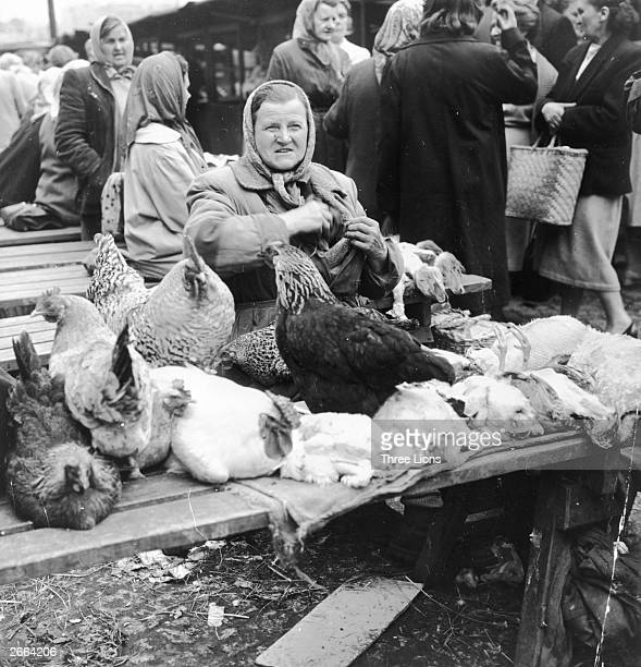 A woman selling live chickens at a Polish market place