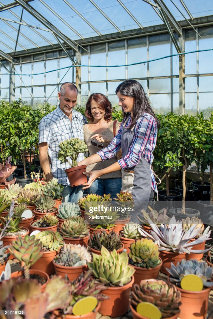 Woman Ing Potted Plants To In Nursery Stock Photo