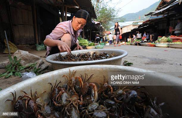 A woman sells rice field crabs at a local market in the north western mountainous town of Son La on May 5 2009 Rice field crabs are a popular food...