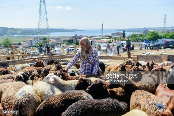 A woman sells sheep at a market during the Eid alAdha celebrations in Istanbul on September 1 2017 Muslims across the world are preparing to...