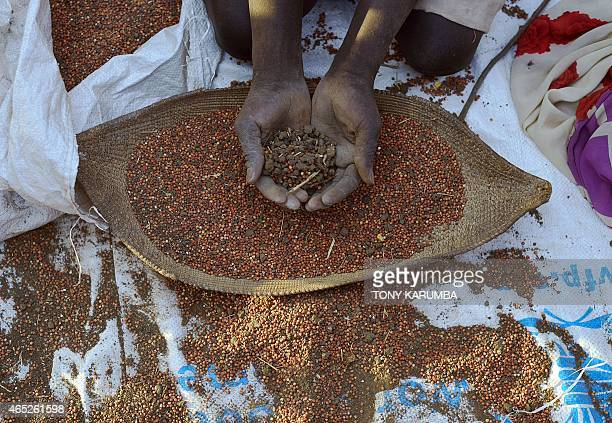 Woman separates grain from soil after collecting seeds spilt from bags that bust open during an aerial food-drop over a field at a village in Nyal,...