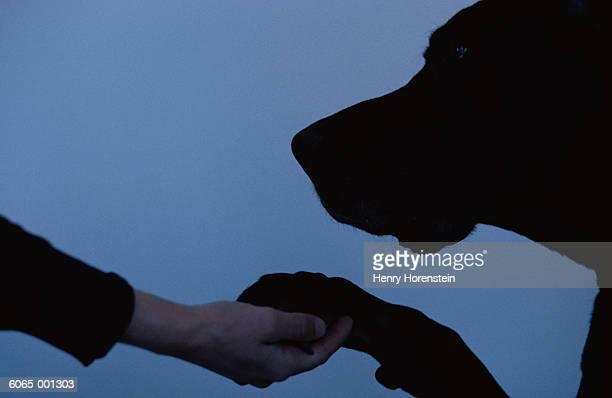 Woman Shaking Dog's Paw