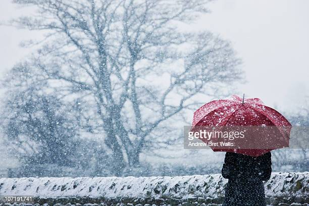 woman sheltering under umbrella in a snow storm - weather stock pictures, royalty-free photos & images