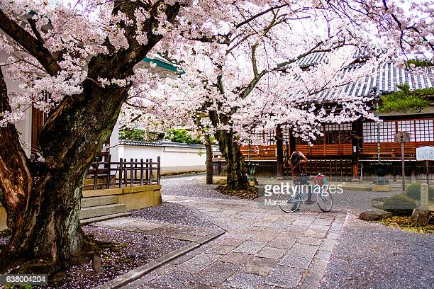 A woman shooting cherry blossoms
