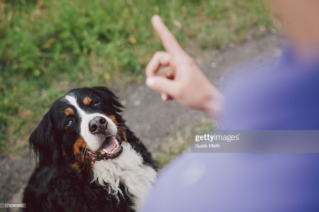 Woman showing warning finger to her dog : Stock Photo
