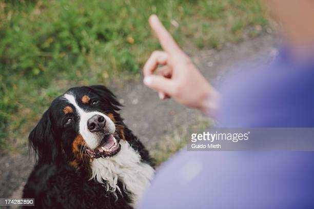 woman showing warning finger to her dog - hand sign stock pictures, royalty-free photos & images