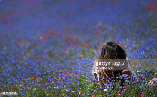 A woman sits in the middle of flowers near Castelluccio a small village in central Italys Umbria region on July 5 2018