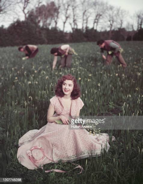 A woman sitted in a daffodil field wearing bucolic pink embroidered dress holds a bouquet of daffodils on the Isles of Scilly UK circa 1955