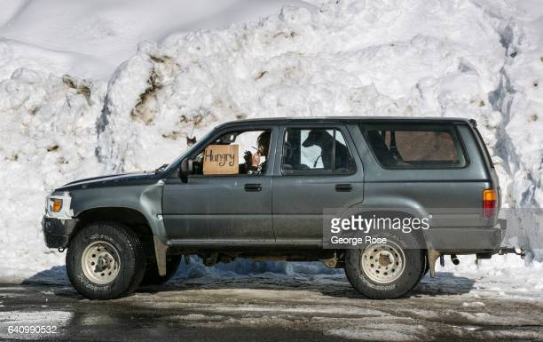 A woman sitting in a four wheel Toyota truck with her two dogs and two cats begs for food on January 28 in South Lake Tahoe California The sixyear...
