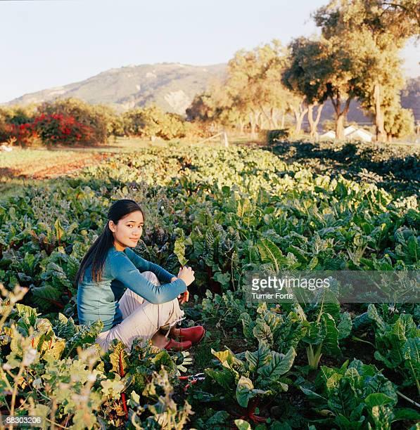 Woman sitting in lettuce rows