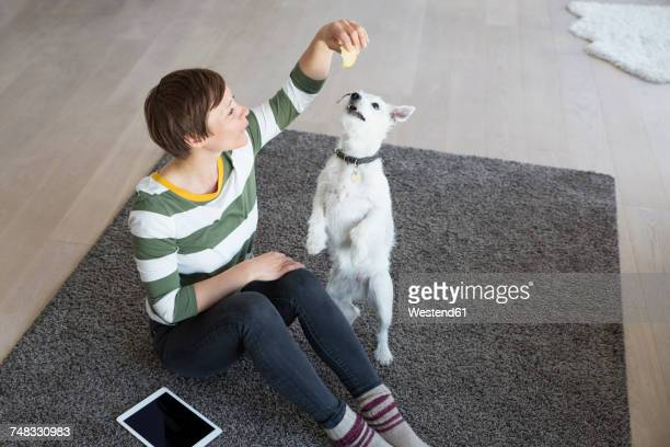 woman sitting on the floor in the living room with her dog - pet equipment stock pictures, royalty-free photos & images
