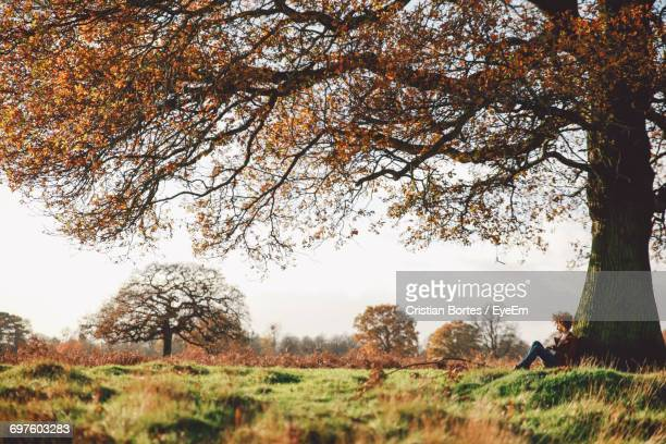 woman sitting under tree in field - bortes stockfoto's en -beelden