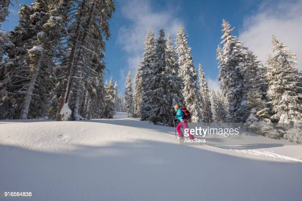 Woman ski touring thorugh powdery snow in coniferous forest