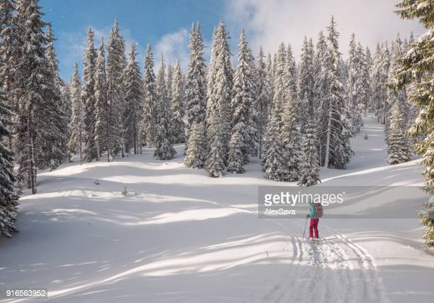 Woman ski touring through coniferous forest covered with powdery snow