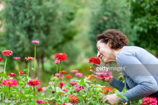 woman smelling flower - red roses garden stock pictures, royalty-free photos & images