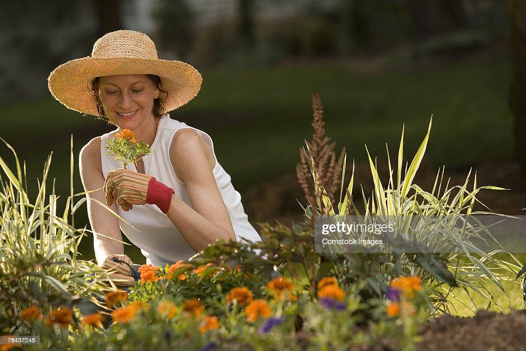 Woman smelling flowers in garden : Stockfoto