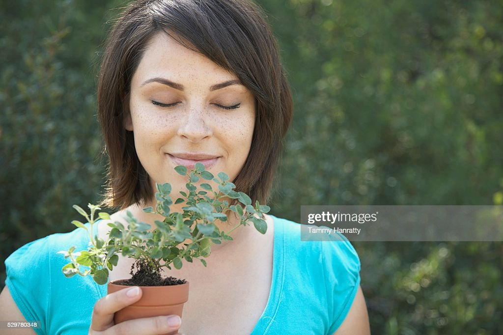 Woman smelling oregano plant : Foto de stock