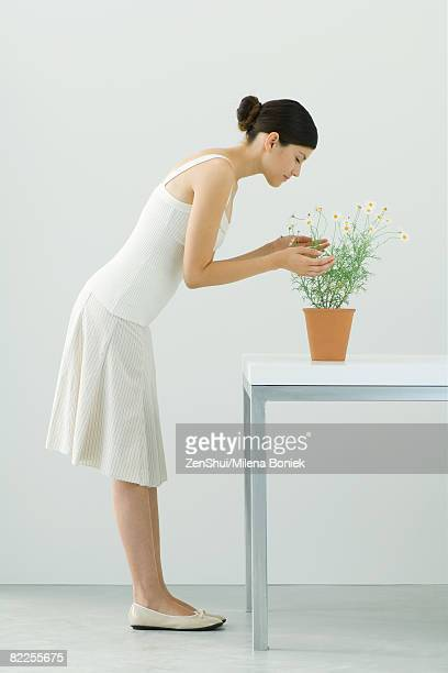woman smelling potted chamomile plant, eyes closed, side view - bending over stock pictures, royalty-free photos & images