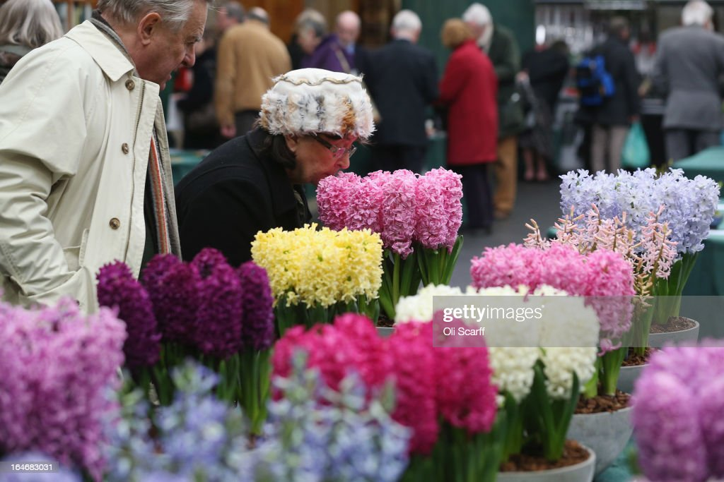 A woman smells hyacinth plants on display at the RHS Great London Plant Fair on March 26, 2013 in London, England. The fair takes place in the RHS Horticultural Halls on March 26-27, 2013 and features numerous botanical displays, advice from the RHS, Alpine Garden Society stalls and the results of the 'Early Daffodil and Hyacinth Competition'.
