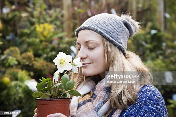 woman smells the flowers of a christmas rose, hellebore in a city garden centre. - ヘレボルス ストックフォトと画像