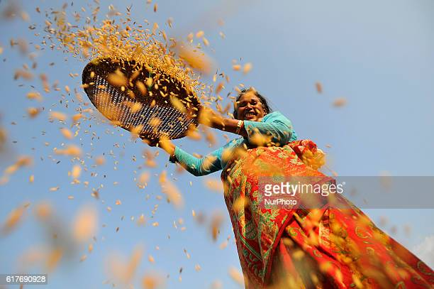 A woman smiles as separates rice grains from the glumes or husks using a traditional winnowing method at Chhampi Patan Nepal on Monday October 24...