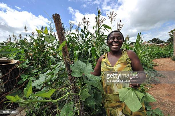 MARAWANYIKA A woman smiles as she checks maize crops on a small scale farm in Chinhamora about 50 km north of Harare on February 10 2011 For more...
